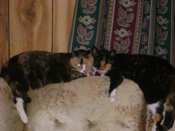 Trouble (aka Tubby) and Ryoko (aka Freak). No they are not sisters.