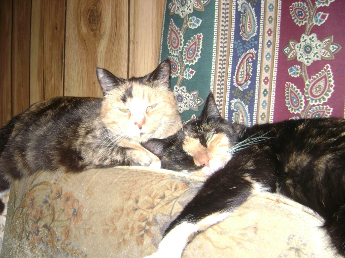 More of my girls, Trouble and Ryoko.
