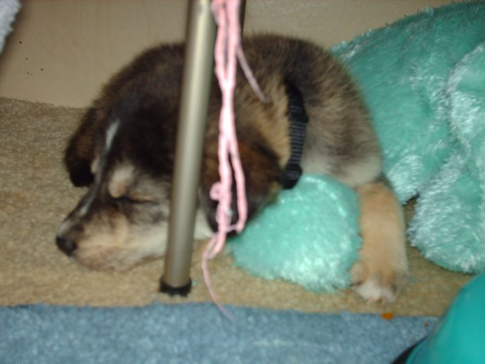 This is my favorite picture of Vader! He was so tiny! September of 2007.